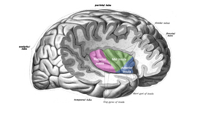 What Happens in the Brain During a Panic Attack